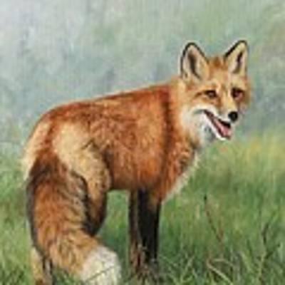 Fox  Poster by David Stribbling