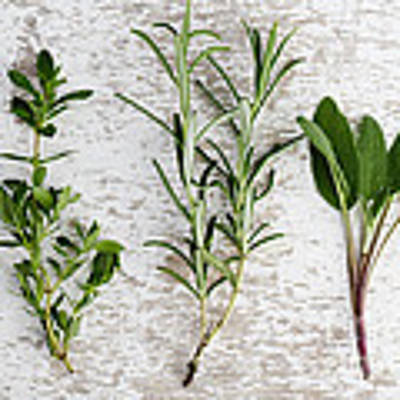 Fresh Herbs Poster by Nailia Schwarz