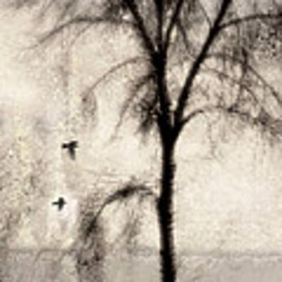 Glimpse Of A Coastal Pine Poster