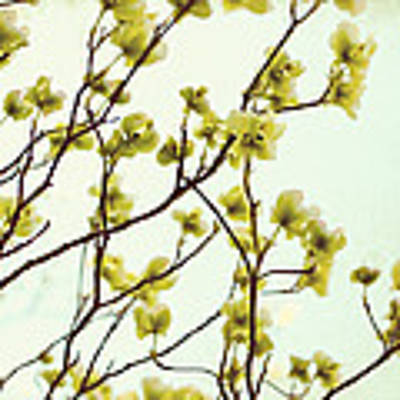 Green Dogwood Poster