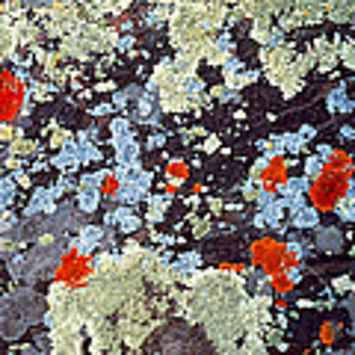 Lichens On Rock Co Usa Poster by Panoramic Images
