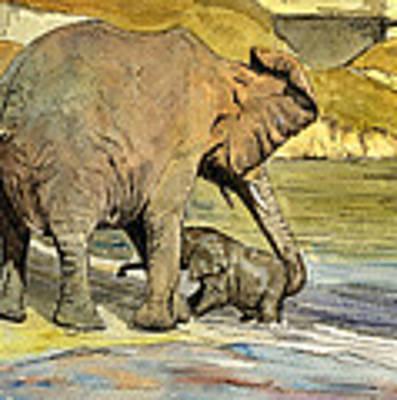 Mom And Cub Elephants Having A Bath Poster
