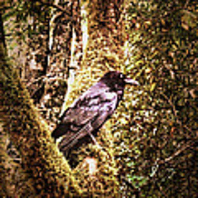 Muir Woods Raven 002 Poster by Lance Vaughn