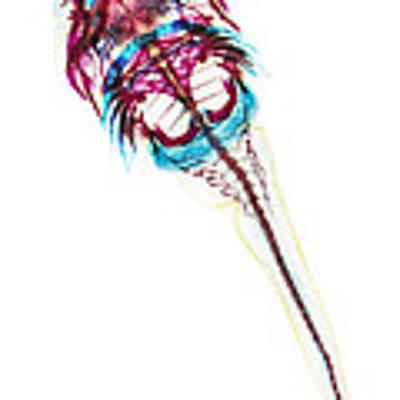 Northern Clingfish Poster