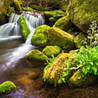 Roaring Fork Great Smoky Mountains National Park Tn Poster