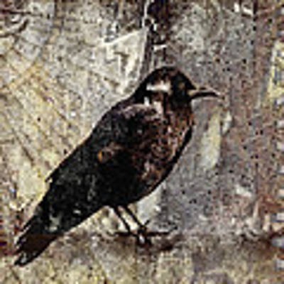 Same Crow Different Day Poster by Carol Leigh