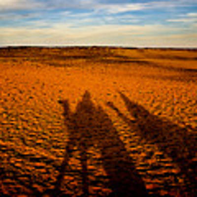 Shadows On The Sahara Poster by Mark E Tisdale