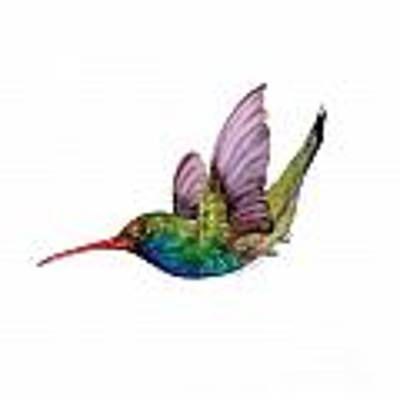 Swooping Broad Billed Hummingbird Poster