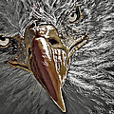 War Eagle Poster by Donna Proctor
