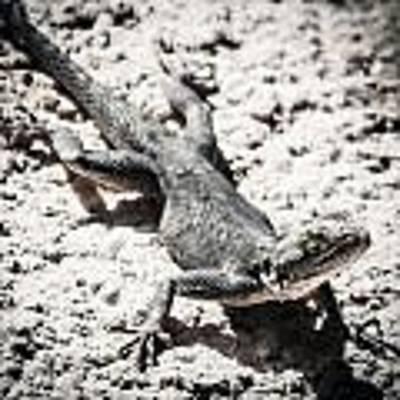 Weird Lizard Poster by Stwayne Keubrick