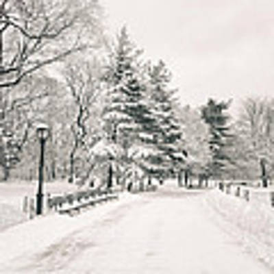 Winter Path - Snow Covered Trees In Central Park Poster by Vivienne Gucwa