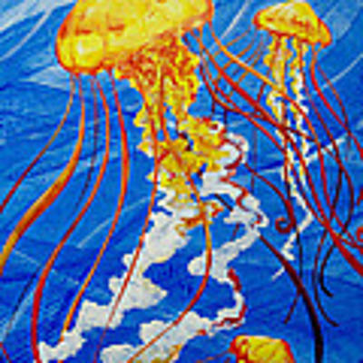 Jellyfish Poster by John Gibbs