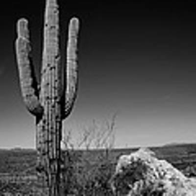 Lone Saguaro Poster