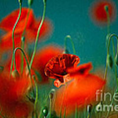 Red Poppy Flowers 05 Poster by Nailia Schwarz