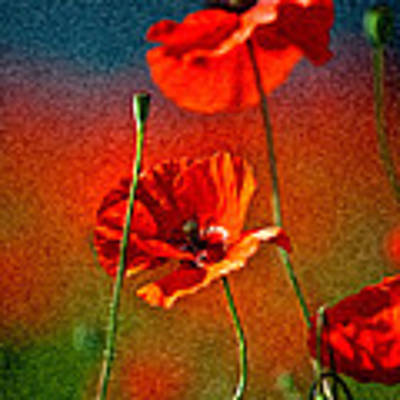 Red Poppy Flowers 08 Poster by Nailia Schwarz
