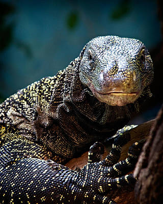 Poster featuring the photograph  A Crocodile Monitor Portrait by Lana Trussell