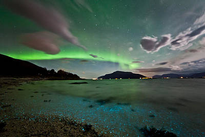 Auroras And Dinoflagellates Poster
