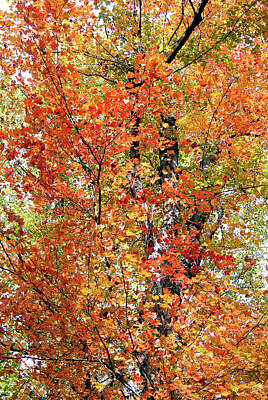 Autumn Confetti Poster by Margie Avellino