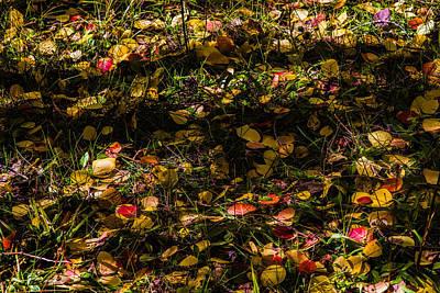 Autumn's Mosaic Poster