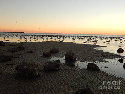 Beach Rocks Barnacles And Birds Poster