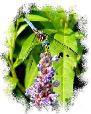Poster featuring the photograph  Blue Dragonfly by Lila Fisher-Wenzel