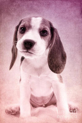 Cute Luna Poster by Angela Doelling AD DESIGN Photo and PhotoArt