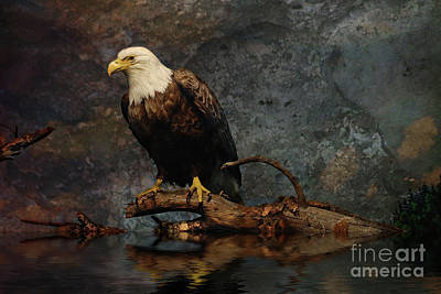 Magestic Eagle  Poster by Elaine Manley