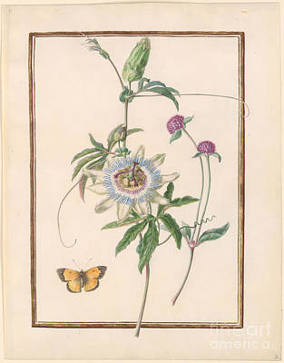 Passion-flower Poster