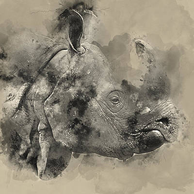 Rhino Watercolor Portrait 1 - By Diana Van Poster