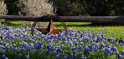 Texas Bluebonnets IIi Poster