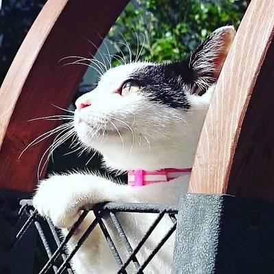 Koneko Means A Kitten Poster