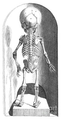 Anatomia Humani Corporis, Table 102 Poster by Science Source