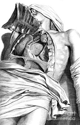 Anatomia Humani Corporis, Table 21, 1690 Poster by Science Source