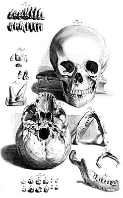 Anatomia Humani Corporis, Table 92, 1690 Poster by Science Source