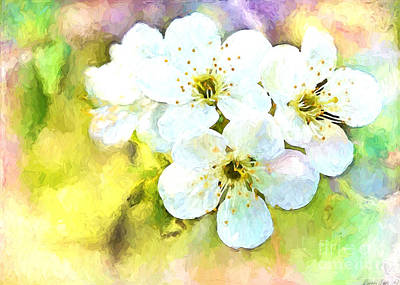 Apple Blossom Painted Effect Poster by Debbie Portwood