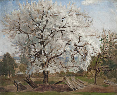 Apple Tree In Blossom Poster by Carl Fredrik Hill