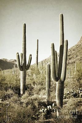 Poster featuring the photograph Arizona Cactus Pair Desert by Andrea Hazel Ihlefeld