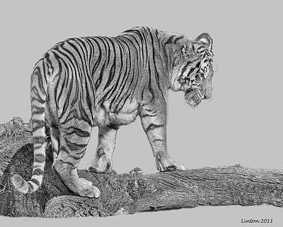 Asian Tiger 2 Poster by Larry Linton