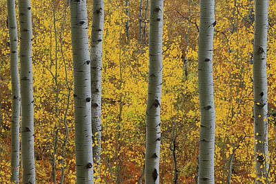 Poster featuring the photograph Aspen In Autumn At Mcclure Pass by Jetson Nguyen