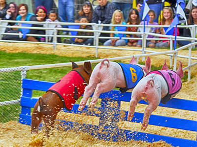 Poster featuring the photograph At The Pig Races by AJ Schibig