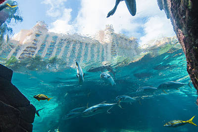 Atlantis Paradise Island - Nassau Bahamas Poster