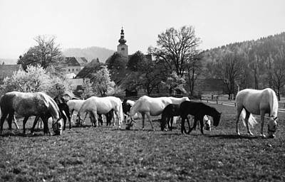 Austria: Horse Farm Poster