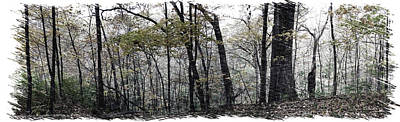 Autumn 2015 Panorama In The Woods Pa 01b Poster