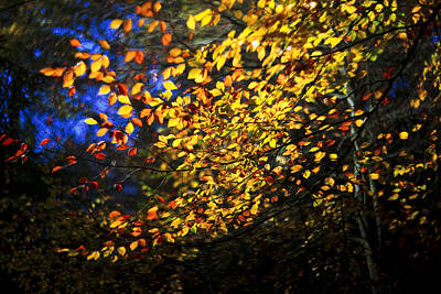 Autumn Leaves Poster by David Harding