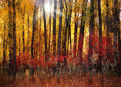 Autumn Light Poster by Leland D Howard