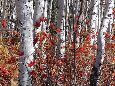 Autumn Splender Poster