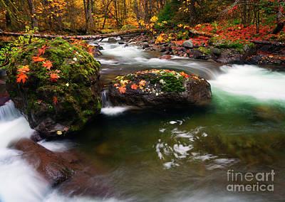Autumn Swirl Poster