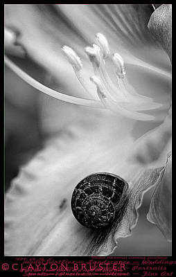 B And White Floral With Snail Poster