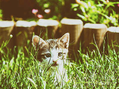 Baby Cat Playing In Grass Poster by Radu Bercan