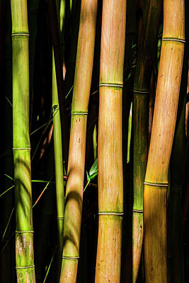 Bamboo Poster by Kelley King